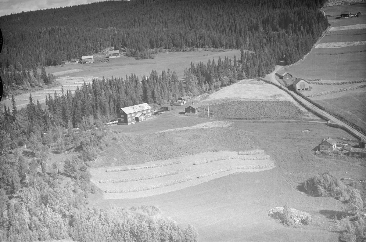Ukjent gård, Øyer, 1953, flere gårder, jordbruk, slåttonn, hesjing, granskog