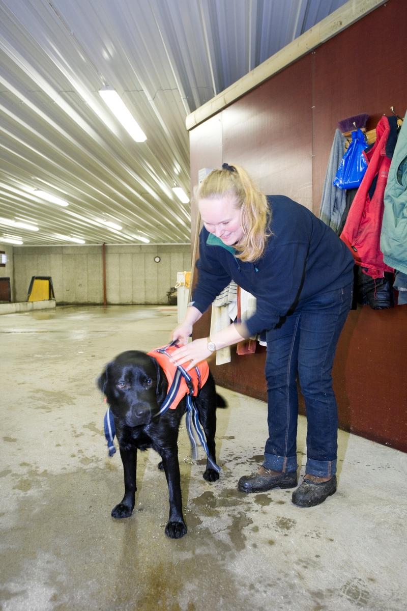 Svømme- og rehabiliteringssenter for hest. En hund får svømmevest på før svømmeturen.