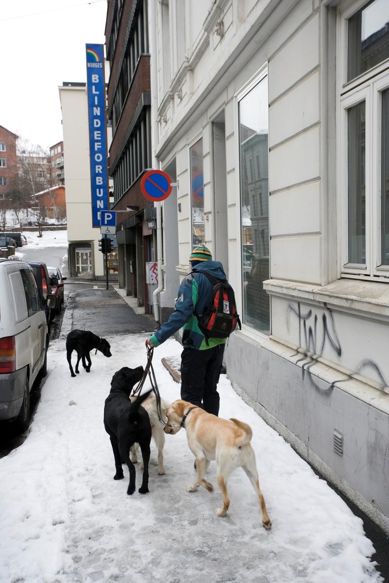 Førerhundskole. Hundene blir leid til Norges Blindeforbunds lokaler på Majorstuen.