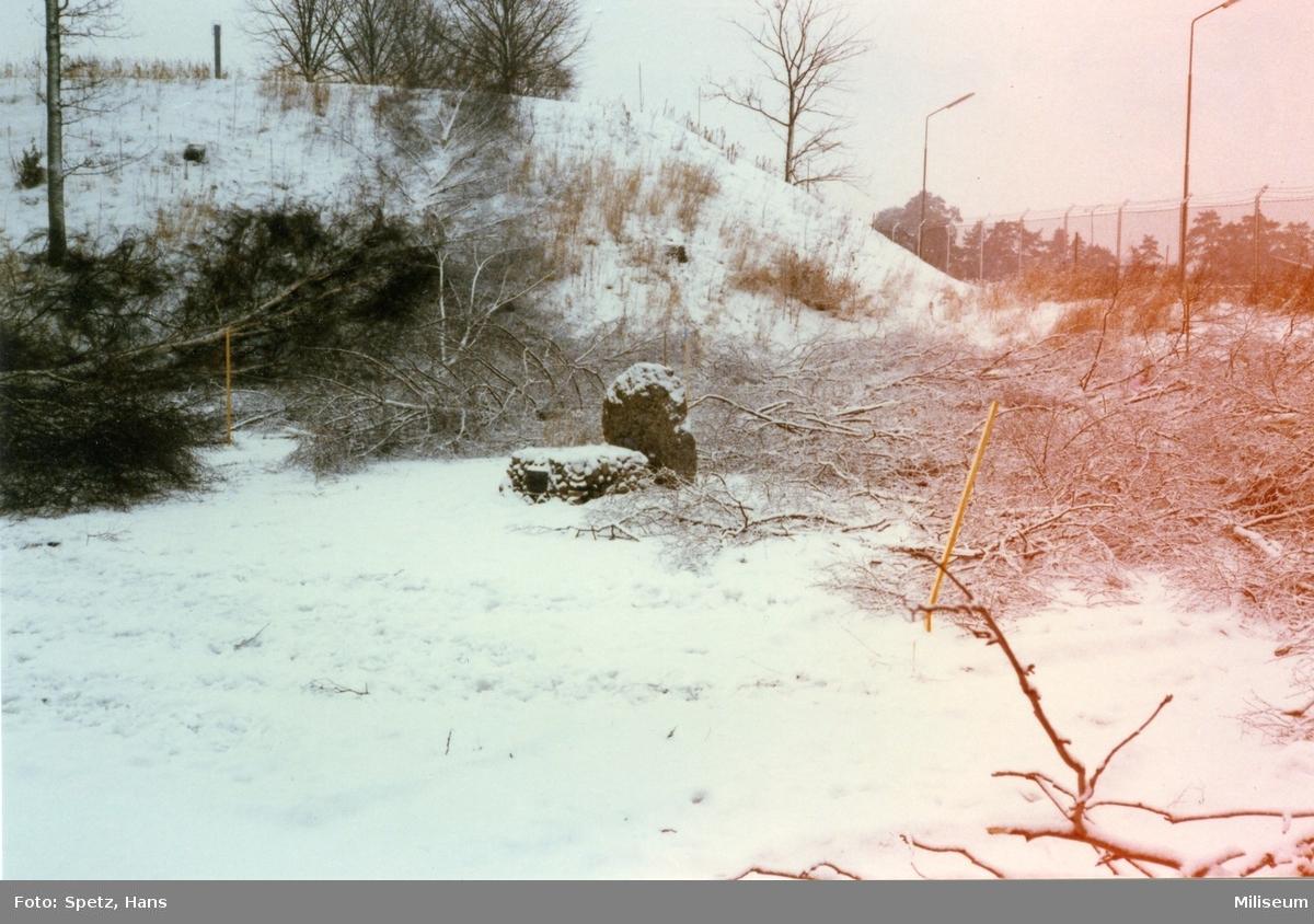 Gossens grav (hästen Gossen), innan flytten av stenen.