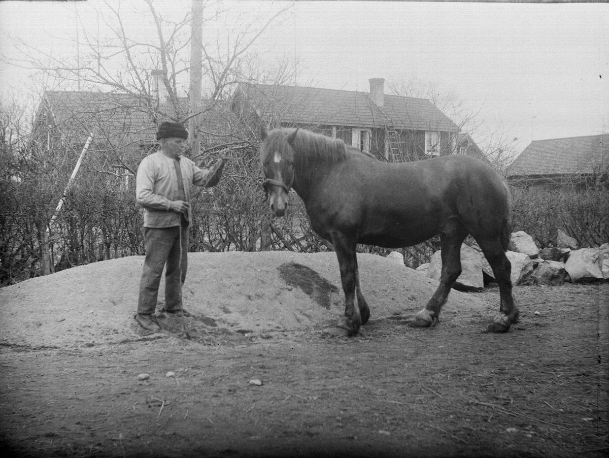 """""""Oskar Hallgren Sevasta med häst"""", Altuna socken, Uppland 1923"""