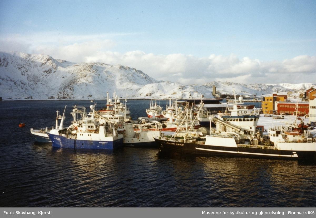 Loddesesong i Honningsvåg. Bilde ble tatt fra Hurtigruta. Mars 2003.