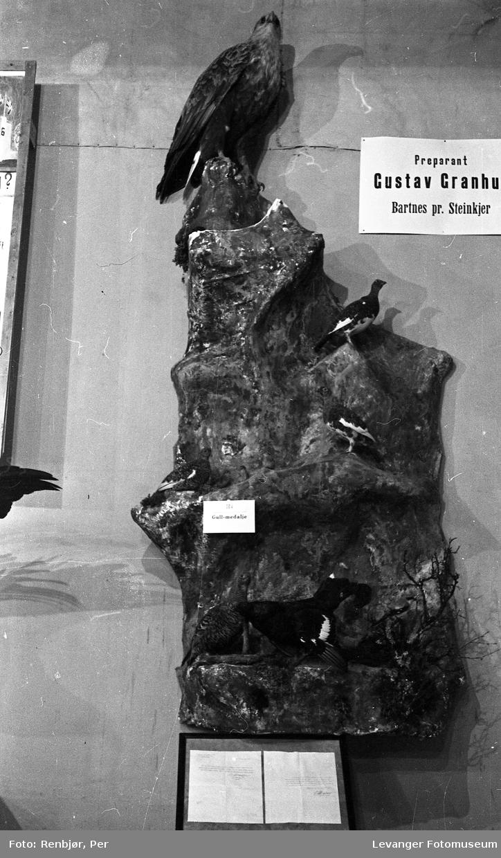 Fra utstillingen om høsten under byjubileet i 1936, ustoppet fugl stand til Preparant Gustav Granhus, gullmedlaje.