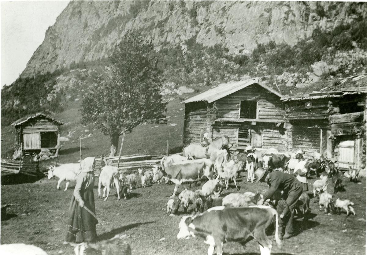 Skaret, Stavedalen. Tunet med buskap, 1897.