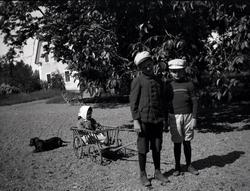 Tre barn som leker med en liten vagn på Tuna gård. En hund g