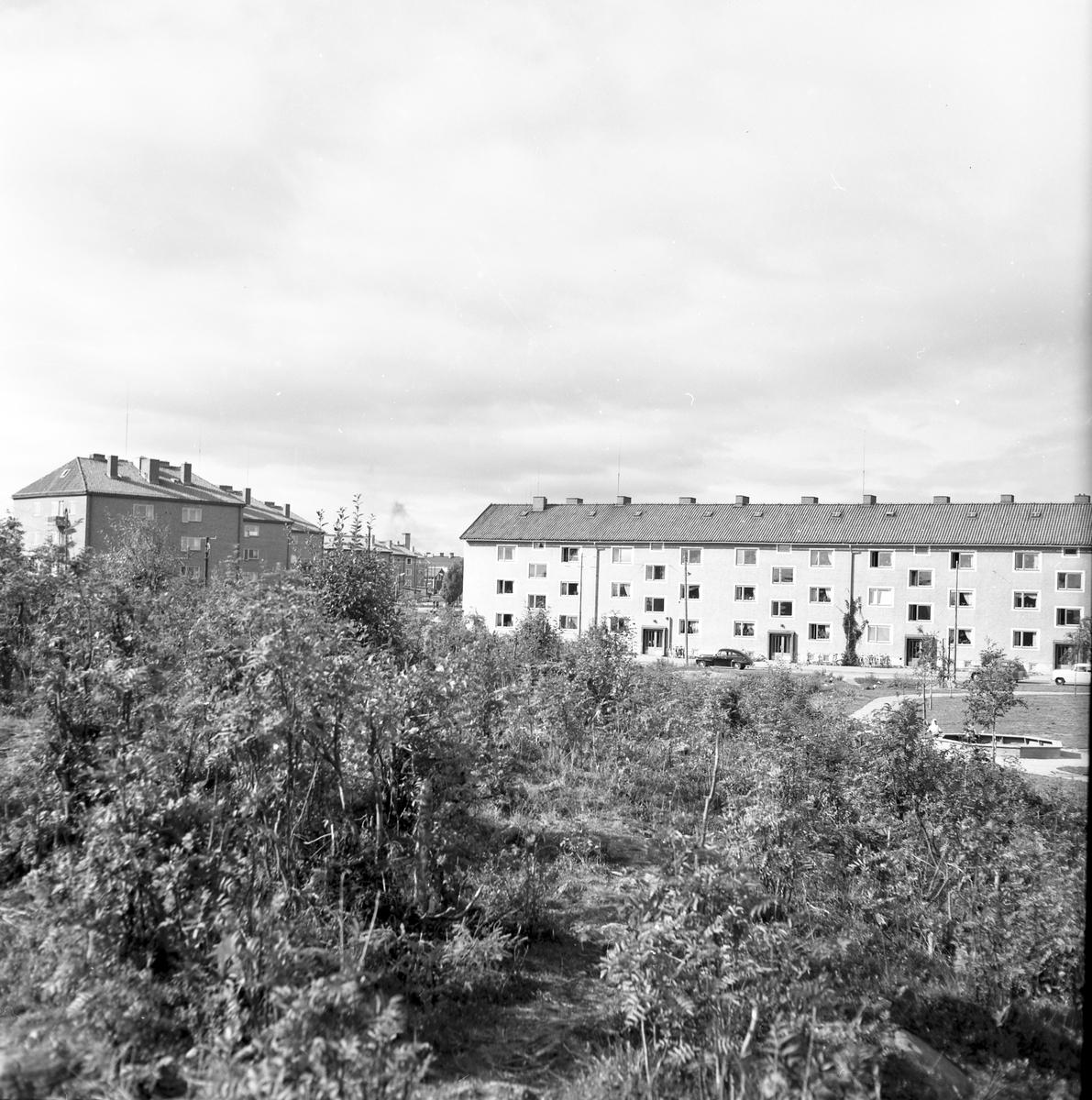År 1957. Brynäs.