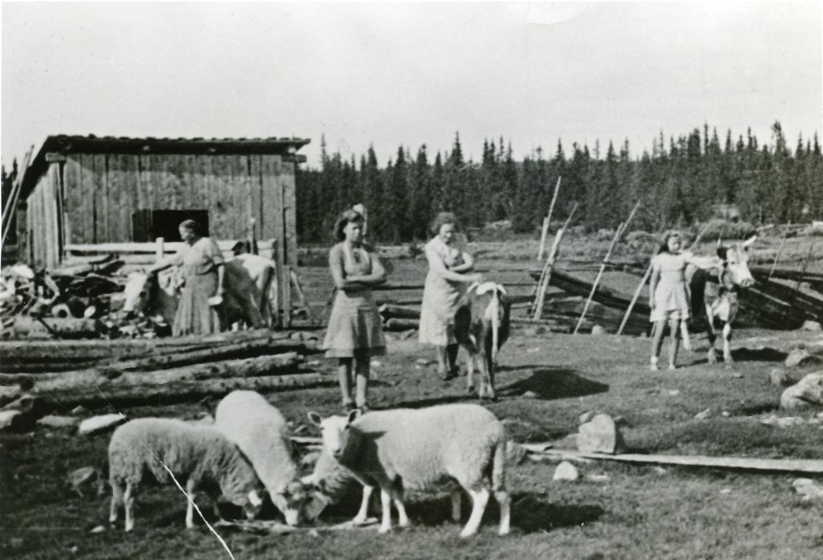 Bilde frå Fløtasæteren, ca. 1945.