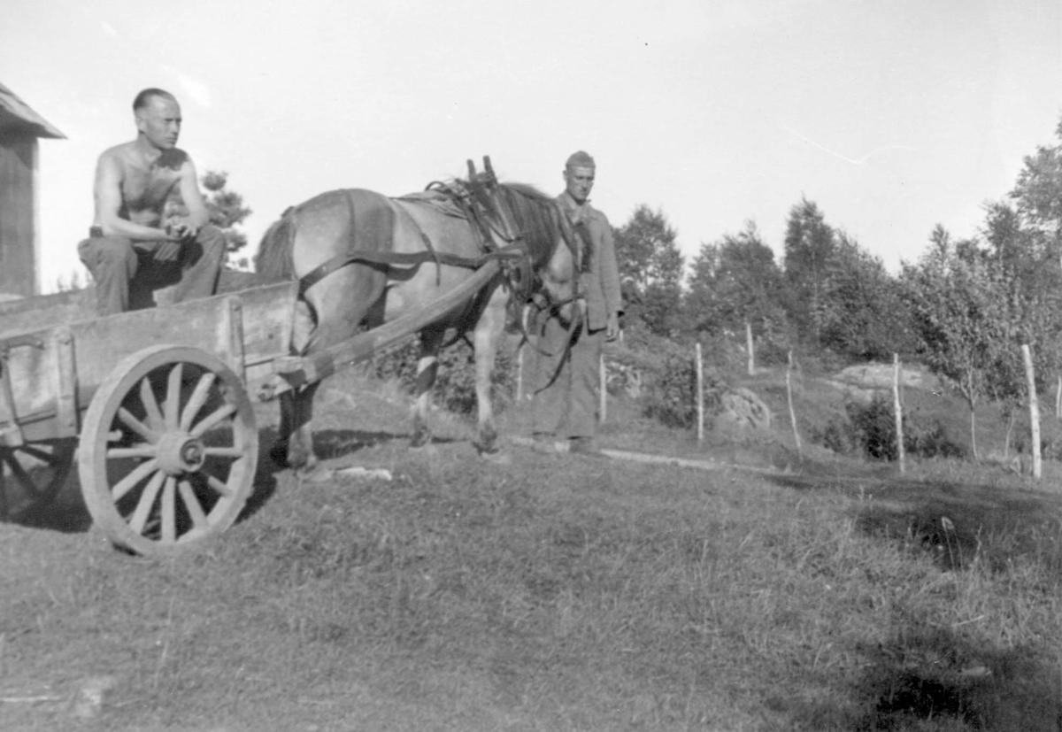 Jordbruk - Krig.