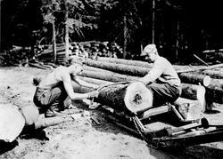 Saging av tømmer på Laugslet i Trøgstad. Skjærer ved rotende