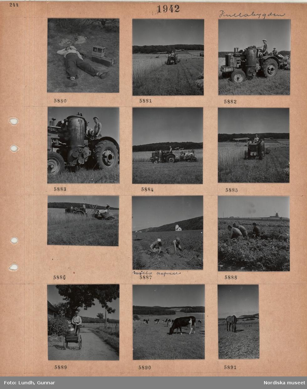 Motiv: Kullabygden, en man ligger utsträckt på marken bredvid en låda med axelrem och en fågelbur, två män arbetar på en traktordriven skördetröska på en åker, gengasdrift, två kvinnor plockar potatis för hand i en korg, i bakgrunden Mölle kapell, tre kvinnor arbetar på ett fält, i bakgrunden en väderkvarn, man med liten kärra med mjölkbehållare, betande kor, betande häst.