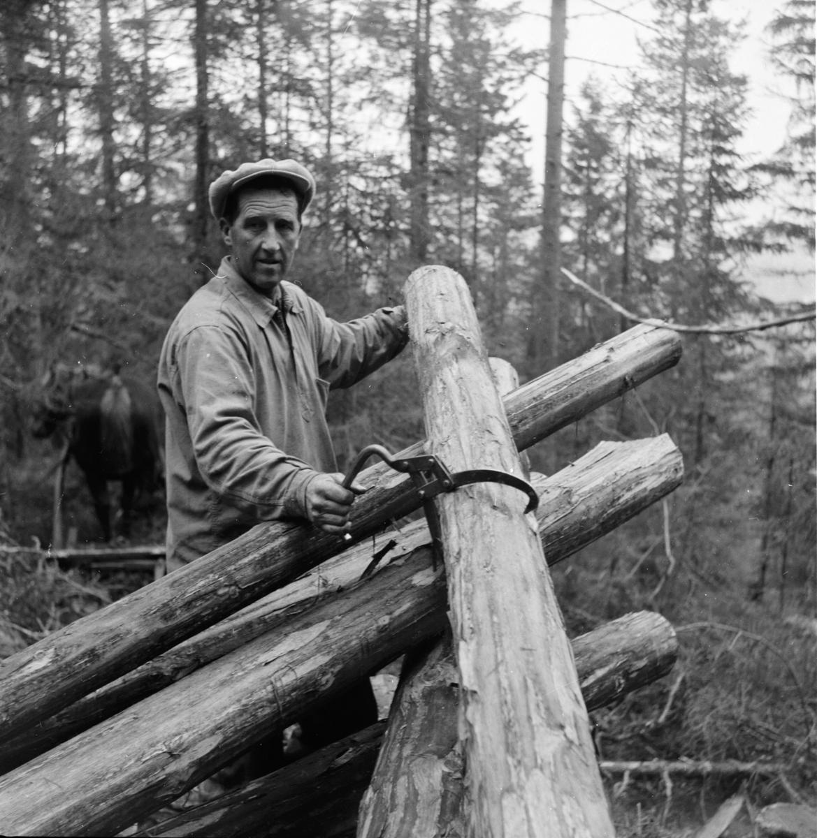 Johan Skoglund timmerkör Hallen. Oktober 1953