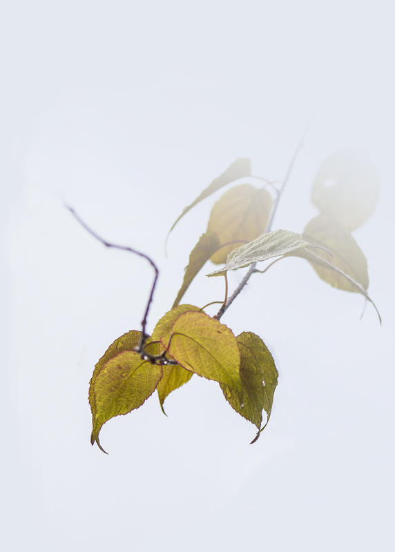 blader.jpg