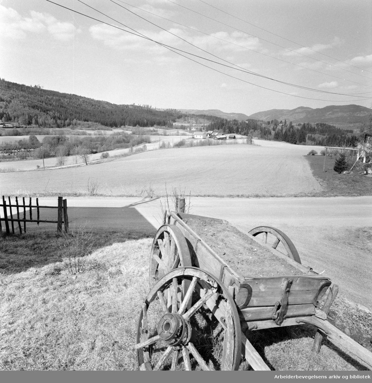 Sørkedalen. Ikke alle jorder ligger brakk. Mai 1974