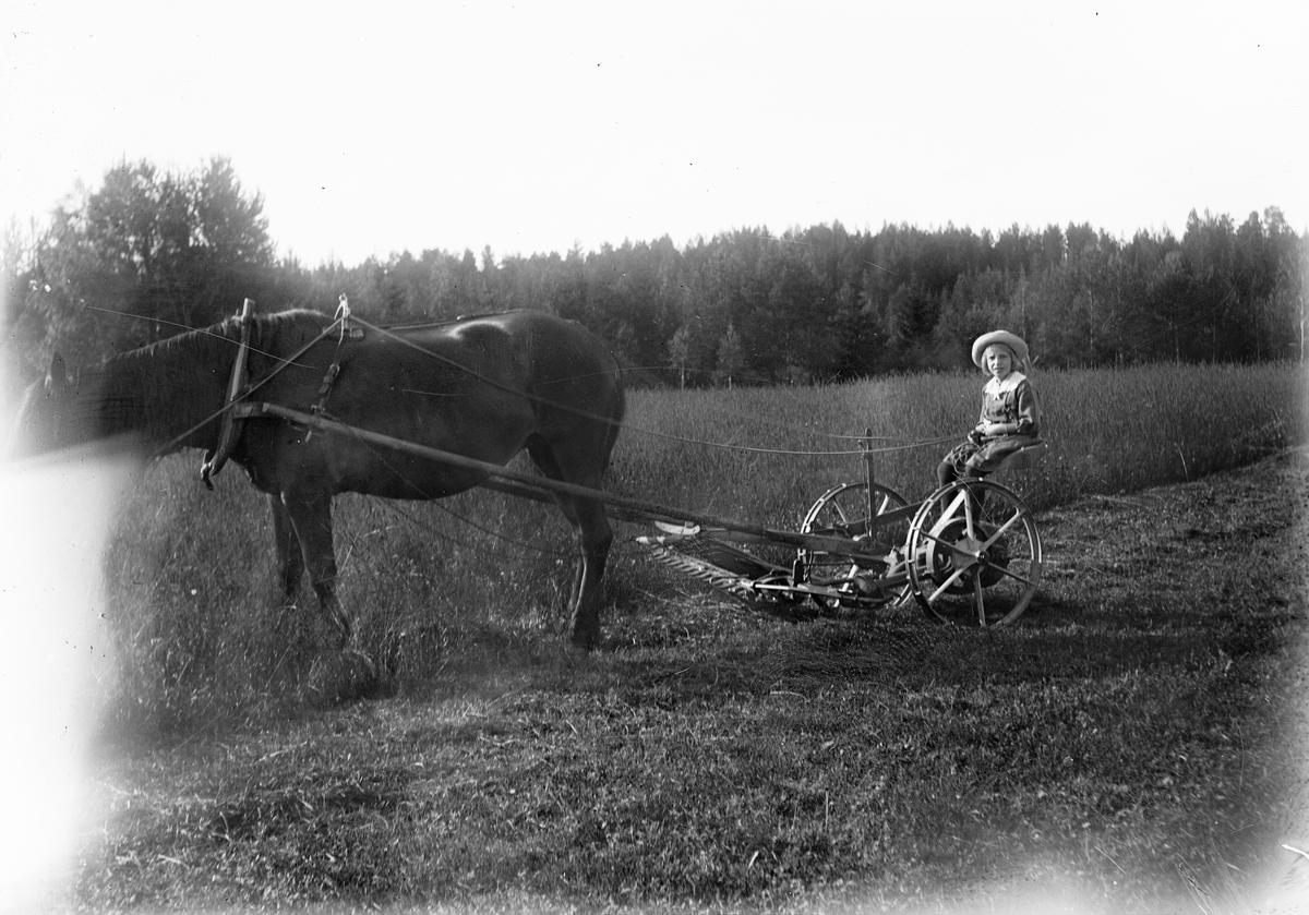 Marit Liljefors kör slåttermaskin dragen av hästen Freja, Svensgården, Dalarna 1910-1920-tal