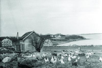 Landskap på Jæren 1957