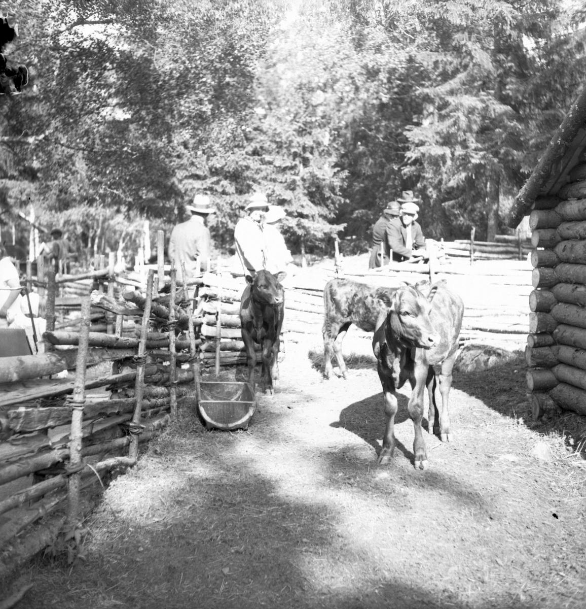 Furuviksparken invigdes pingstdagen 1936.  Nöjesfältet, badplatsen Sandvik och djurparken gjordes iordning.  Hjortdjur
