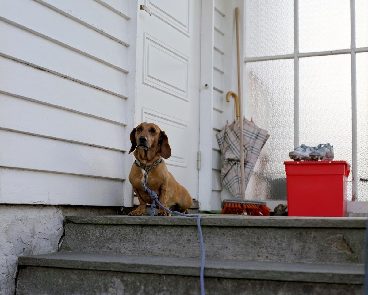 En dachs sitter på trappen ved inngangsdøren til sitt hjem.