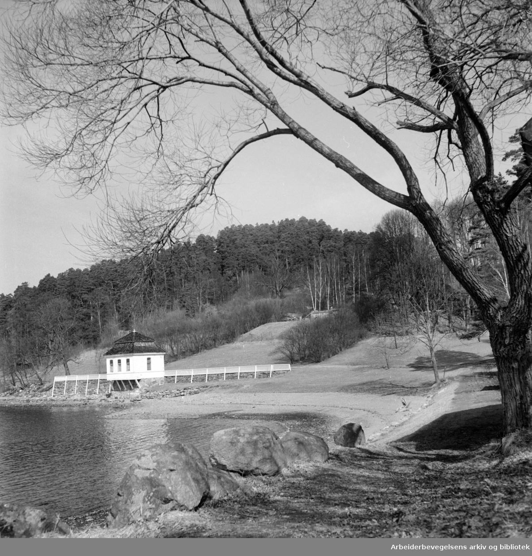 Ljanskollen. April 1955