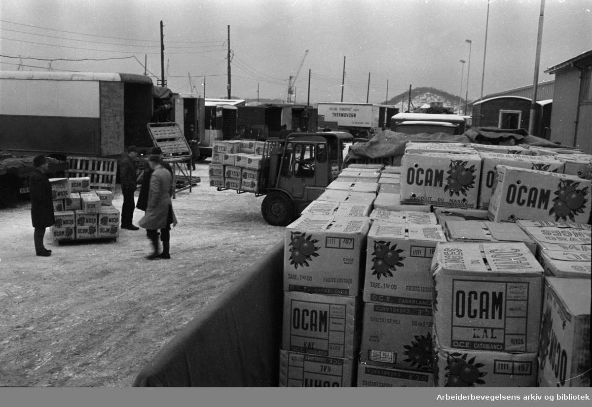Havna. Lastebilsjåfører fra nesten hele landet i arbeid for å bringe appelsinene hjem til sitt distrikt . Desember 1967
