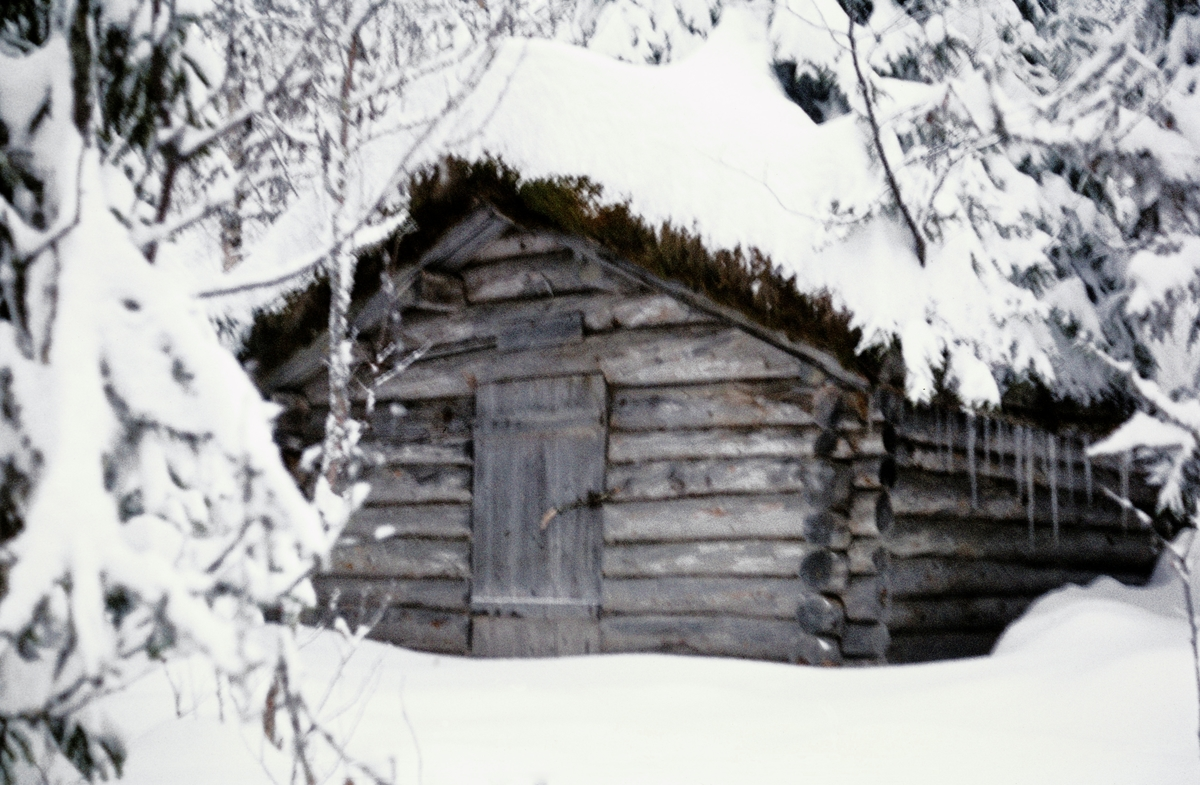 Svabekkbua, ei koie i eiendommen Kirkebøs utmark i Svatsum-grenda i Vestre Gausdal i Oppland fylke.  Dette fotografiet er tatt i slutten av oktober 1974, like før man startet arbeidet med å demontere koia med sikte på at den skulle flyttes og gjenoppføres i friluftsmuseet på Norsk Skogbruksmuseum (fra 2003 Norsk Skogmuseum) i Eleverum.  Dette husværet er en laftekonstruksjon som er om lag 4 meter lang og snaut 3,5 meter bred.  Rafthøyden er om lag 1,5 meter og mønehøyden 2,3 meter.  Svabekkbua har inngangsdør på den ene gavlveggen, som på dette fotografiet vender mot fotografen.  Den har åstak.  På dette tidspunktet sto Svabekkbua i nokså tett skog (gran og bjørk).  Det hadde falt snø da demonteringsarbeidet startet.    Svabekkbua var en gave fra Gausdal skogråd til Norsk Skogbruksmuseum.  Skogrådet kjøpte koia av grunneieren for 1 000 kroner, og betalte dessuten 550 kroner for nødvendig snøbrøyting og hestetransport av tømmeret til bilveg.  Koia ble gjenoppført i museets avdeling for skogshusvær på den nordvestre delen av Prestøya i 1975.  Svabekkbua skal være bygd i den tida Martian Olsen Kirkebø (1853-1954) drev Kirkebø-garden - 1892-1921 - og man antar at den mest sannsynlig er fra den siste delen av denne perioden.  Mer informasjon om Svabekkbua finnes i Norsk Skogmuseums database for den antikvariske bygningssamlinga - jfr. SJF-B.0034.