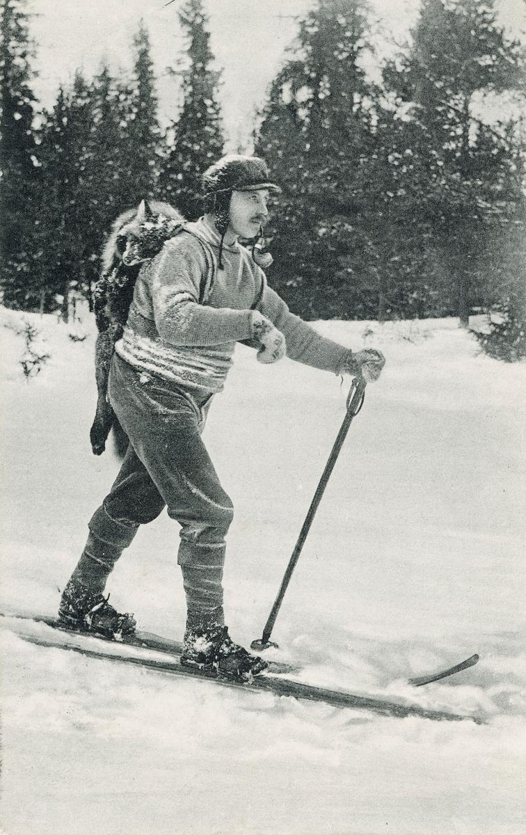 Postkort. Fotografiet på kortets fremside viser en mann som går på ski med en død rev hengende på sekken. Revejakt.
