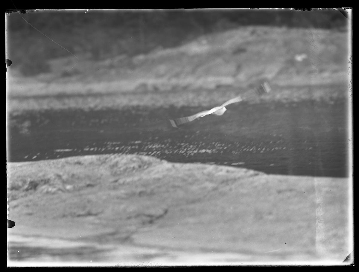 En mås flyger över klippor och vatten.