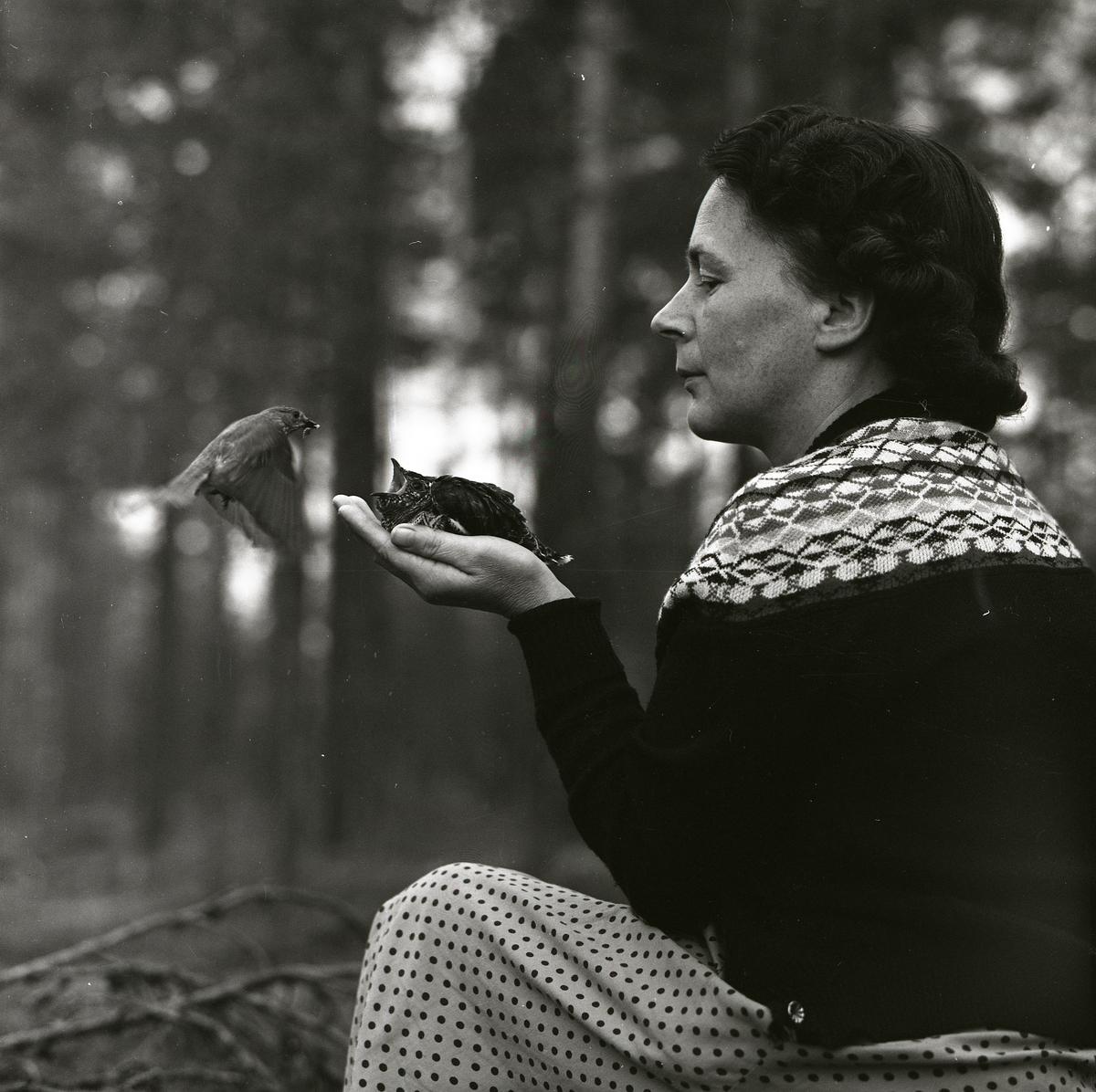 En fågelhona matar en gökunge som sitter i handen på en kvinna den 13 juli 1961.