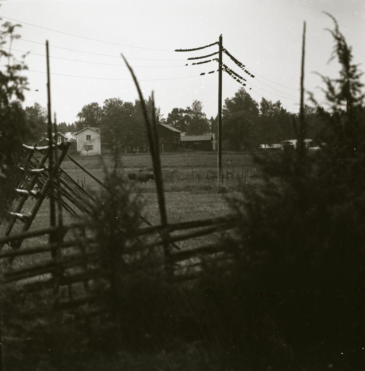En flock starar sitter på elledningar vilka kommer från samma stople, hösten 1969.