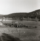 En grupp människor samlade för harfångst på en åker vid sjön Stornien, 6 oktober 1957.