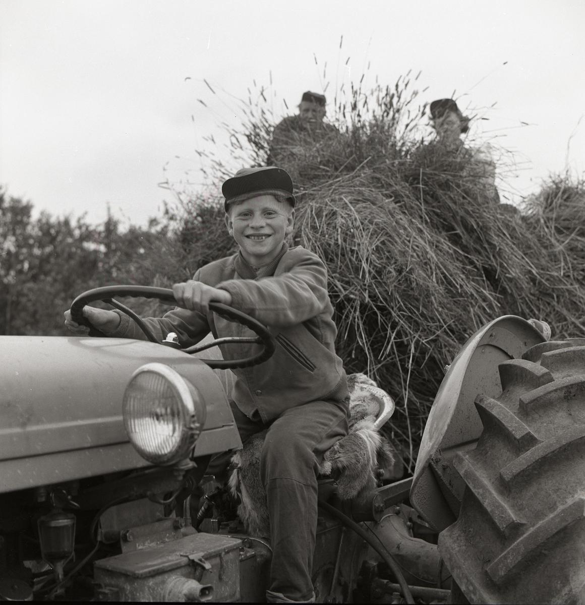 En pojke kör en traktor med ett släp som transporterar nyslagen skörd. På släpet sitter två män, augusti 1960.