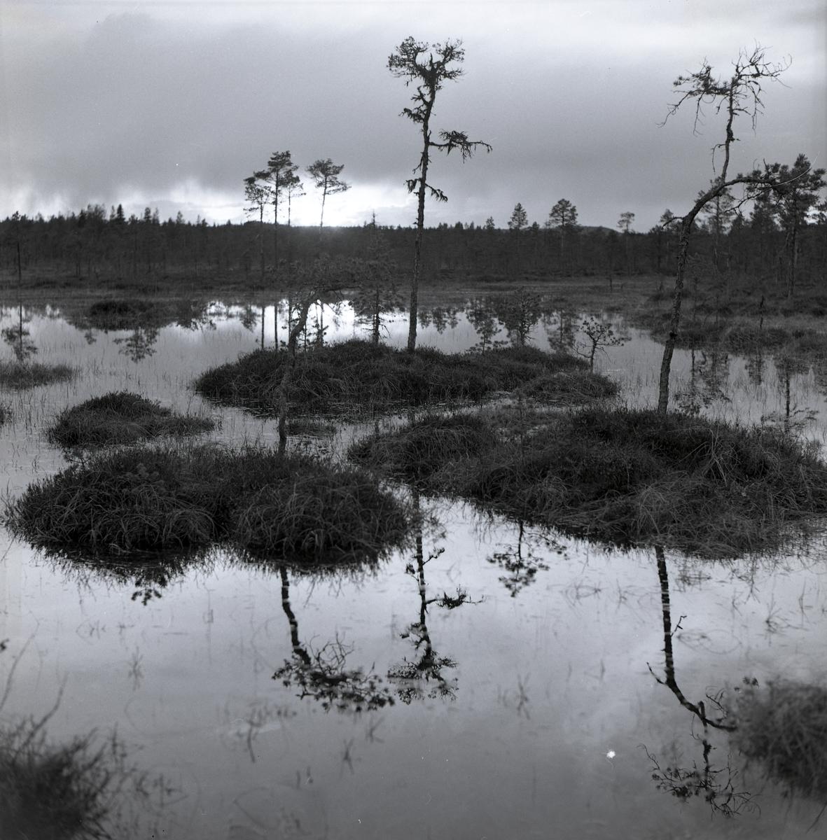 En myr där kullar sticker upp ur vattnet vid Voxna. I vattenytan speglas träden som står bakom, juni 1962.