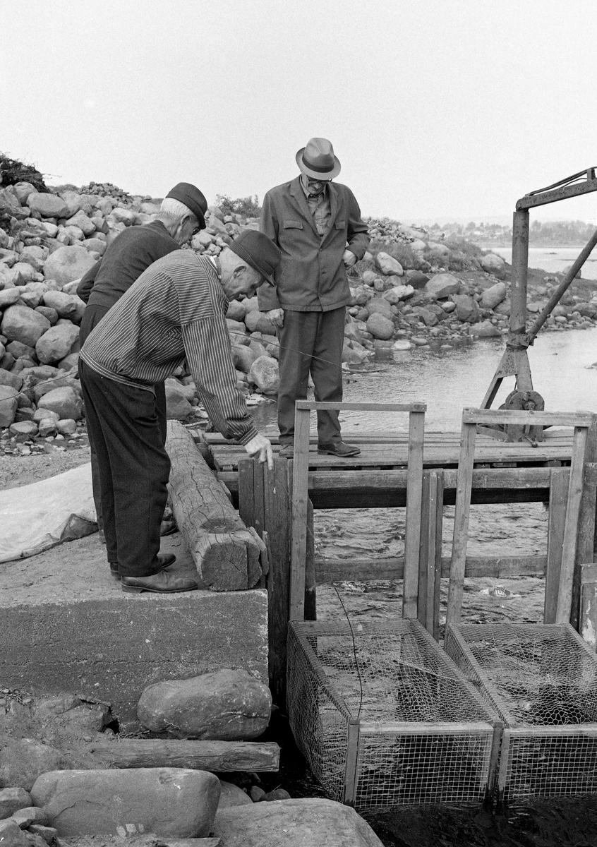 Håkon Berge (1896-1980), Martinus Hovie (1895-1992) og Birger Børresen (1901-1979) forbereder opptak av kuper (teiner) fra fiskebygningen garden Nedre Kåterud i Stange hadde ved Svartelvas utløp i Åkersvika og Mjøsa.  Dette fotografiet ble tatt i slutten av mai 1973.  Dette var sannsynligvis den siste gangen denne fiskebygningen var i bruk.  Den hadde støpte sidekar og ei trebru med ei lita kran (til høyre i bildet), som antakelig ble brukt når kupene skulle heves og tømmes.  Kupene var lagd av trepiler som var trukket med netting - hønsenetting på toppen og den typen som ble brukt i pelsdyrgarder i botnen og på sidene.  De var montert med fangståpningene på motstrøms side, med henblikk på å fange fisk som var på gytevandring oppover elva.  Her ble det primært fanget «sørenne» (mort), men det ble også tatt vederbuk, laue og harr i de samme fangstinnretningene.  Fersvannsbiologen Hartvig Huitfeldt-Kaas beskrivelse av morten i Mjøstraktene og kupefisket etter sørenne er gjengitt under fanen «Opplysninger».