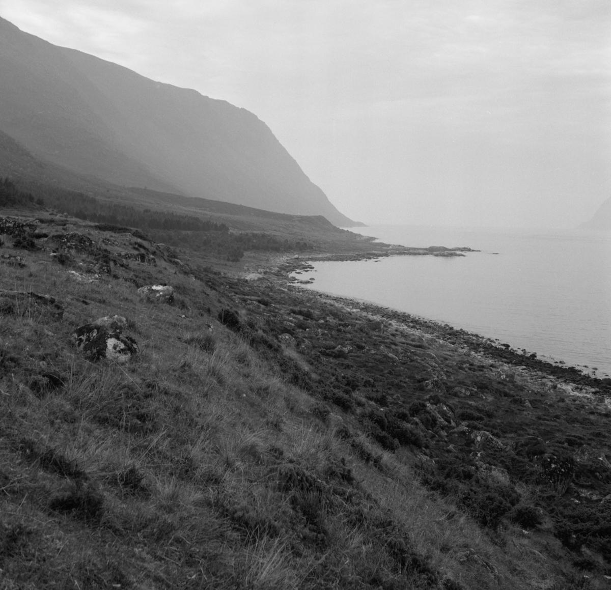 Prospektfotografier i serie av Kalvestad-marka på Sula. På noen av motiva er det spor etter tidligere bebyggelse.