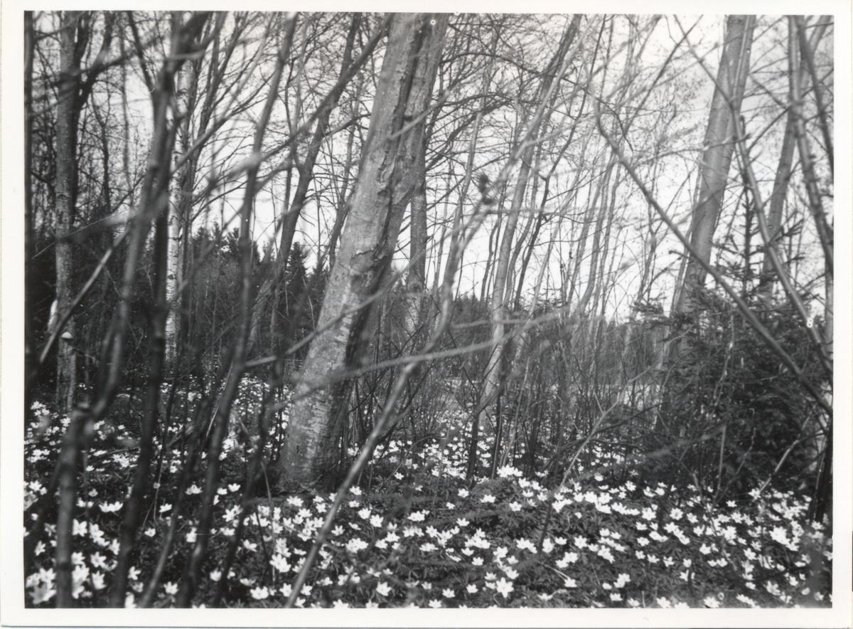 Våren har kommit till Folkarebygden