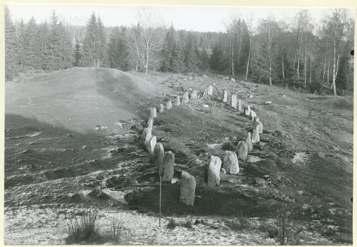 Badelunda sn, Anundshögsområdet.  Långby. Skeppssättningarna I och II under restaureringen av I. 1932.