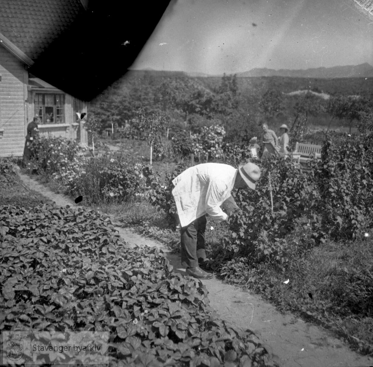Mann sjekker plantene