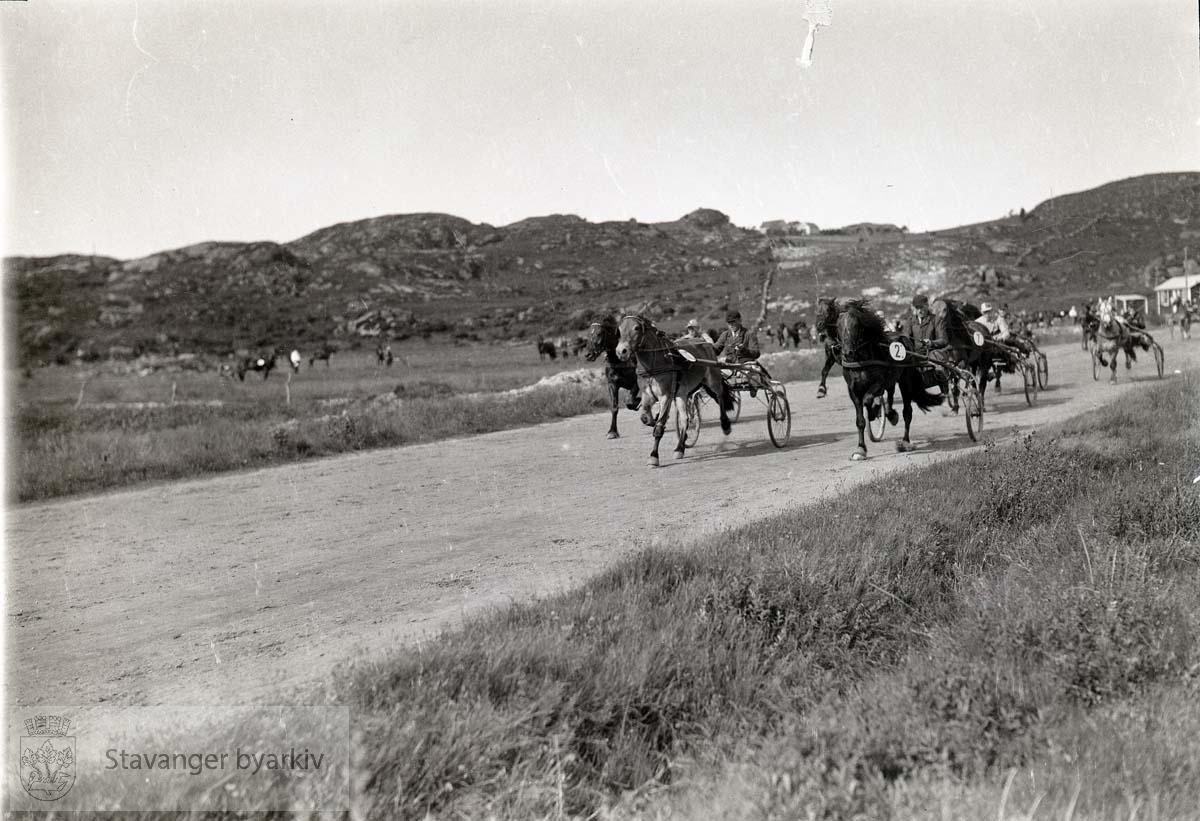 Kusker og hester i kappløp på travbanen