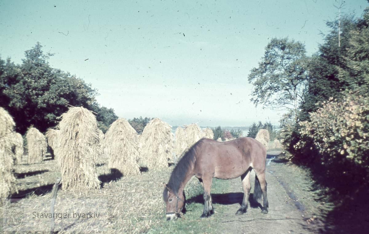Hest foran høystakker