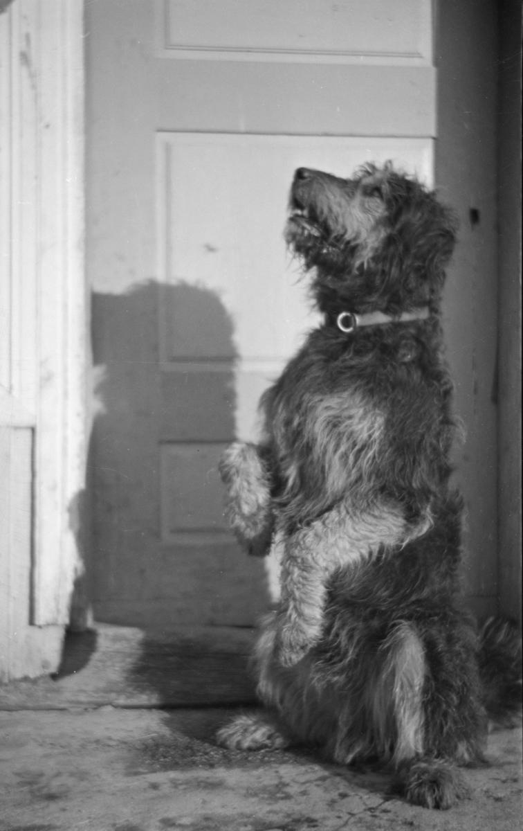 "Hunden ""Max"""