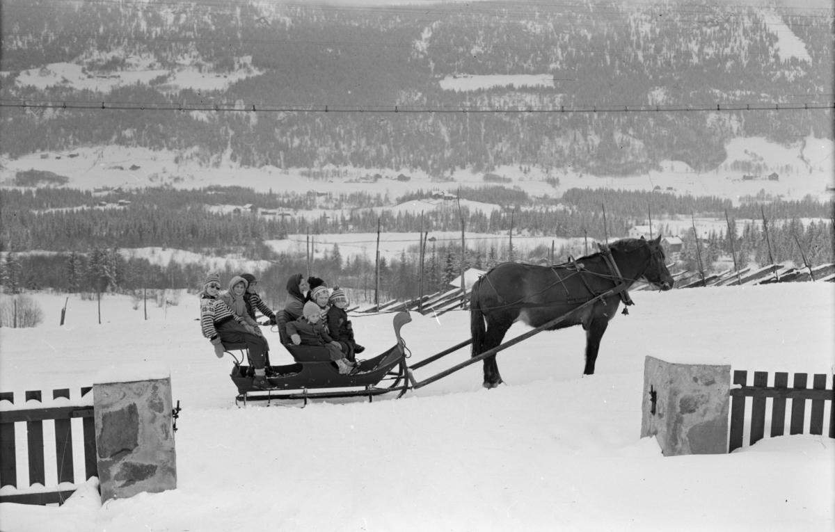 Kjøretur med hest og slede - mange barn