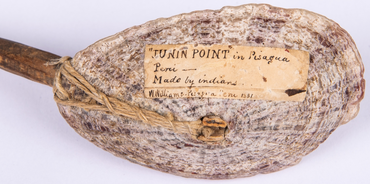 Sked gjod av halv mussla och träskaft.