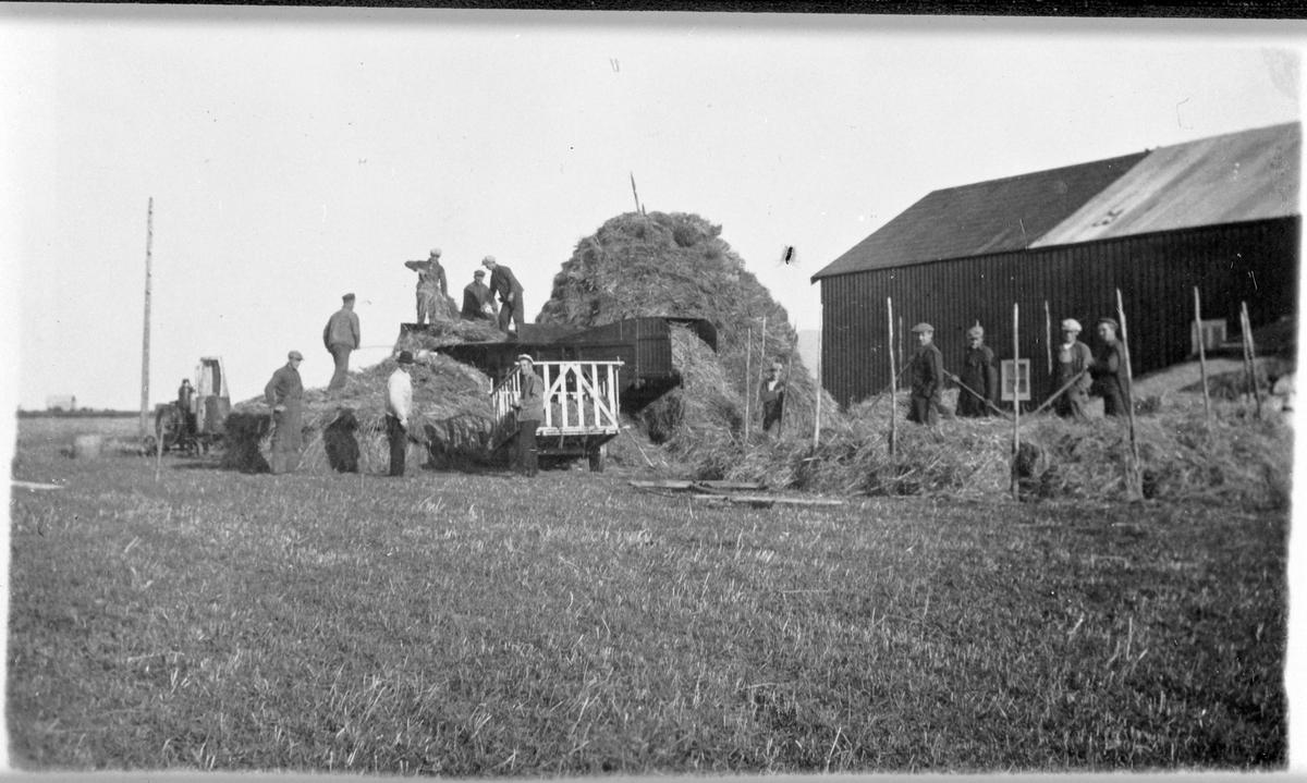 Trøsking på gården Rønne, Ørlandet.