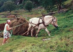 Kvinne, hest