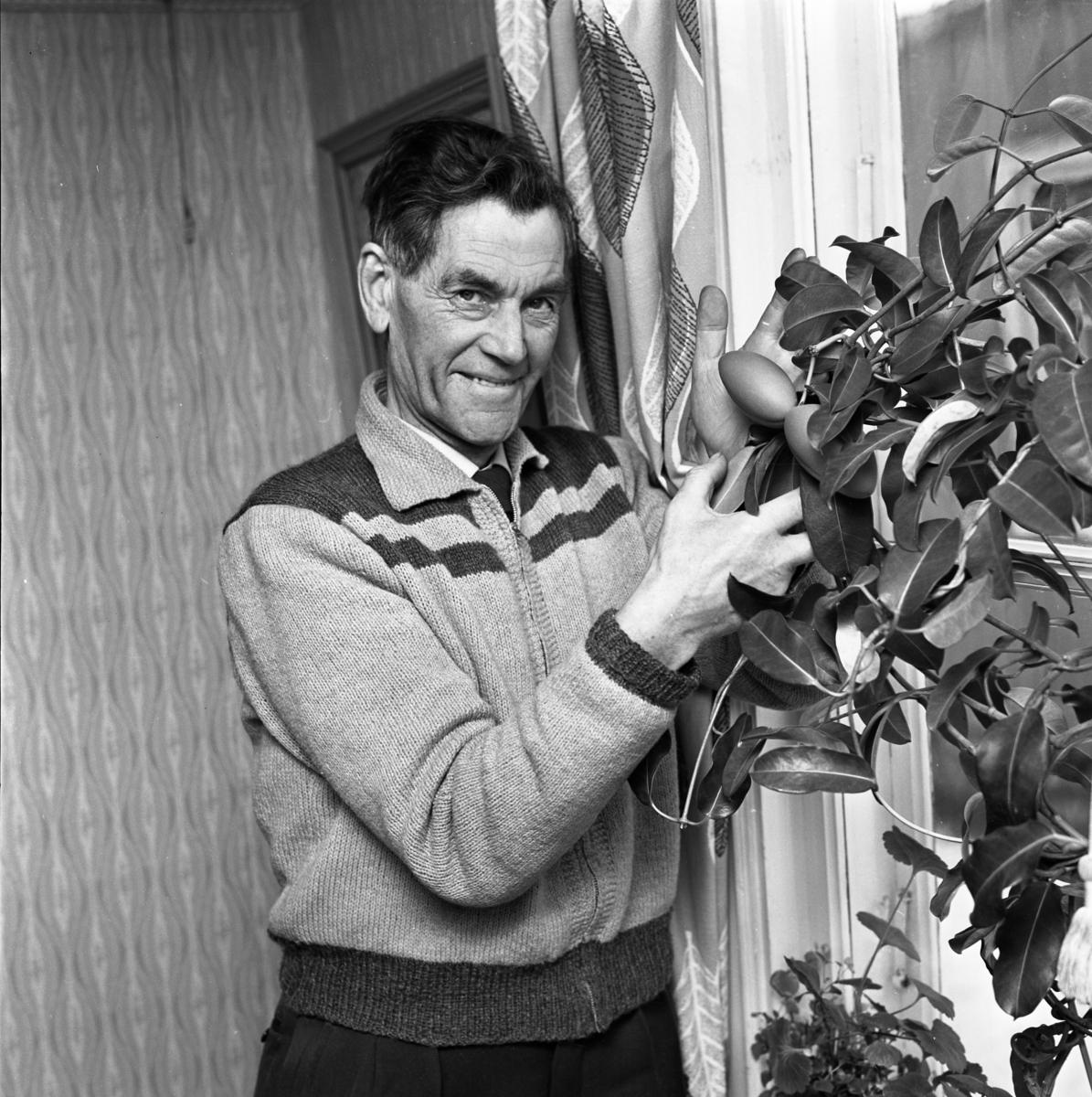 Einar Knutsson på Västerlånggatan visar en ståtlig krukväxt.