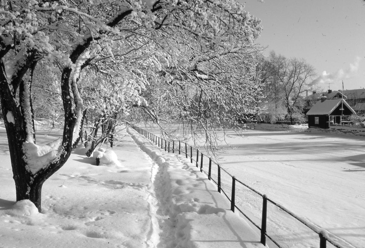 Snö på norra åpromenaden, intill Strandvägen. Utsikt över isen på Arbogaån och ågården på Storgatan 20, på åns södra sida.