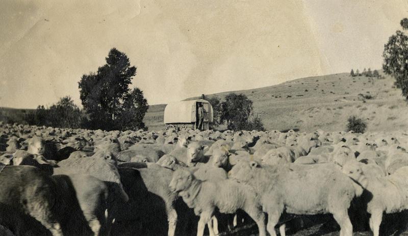 Lende i Montana (Foto/Photo)
