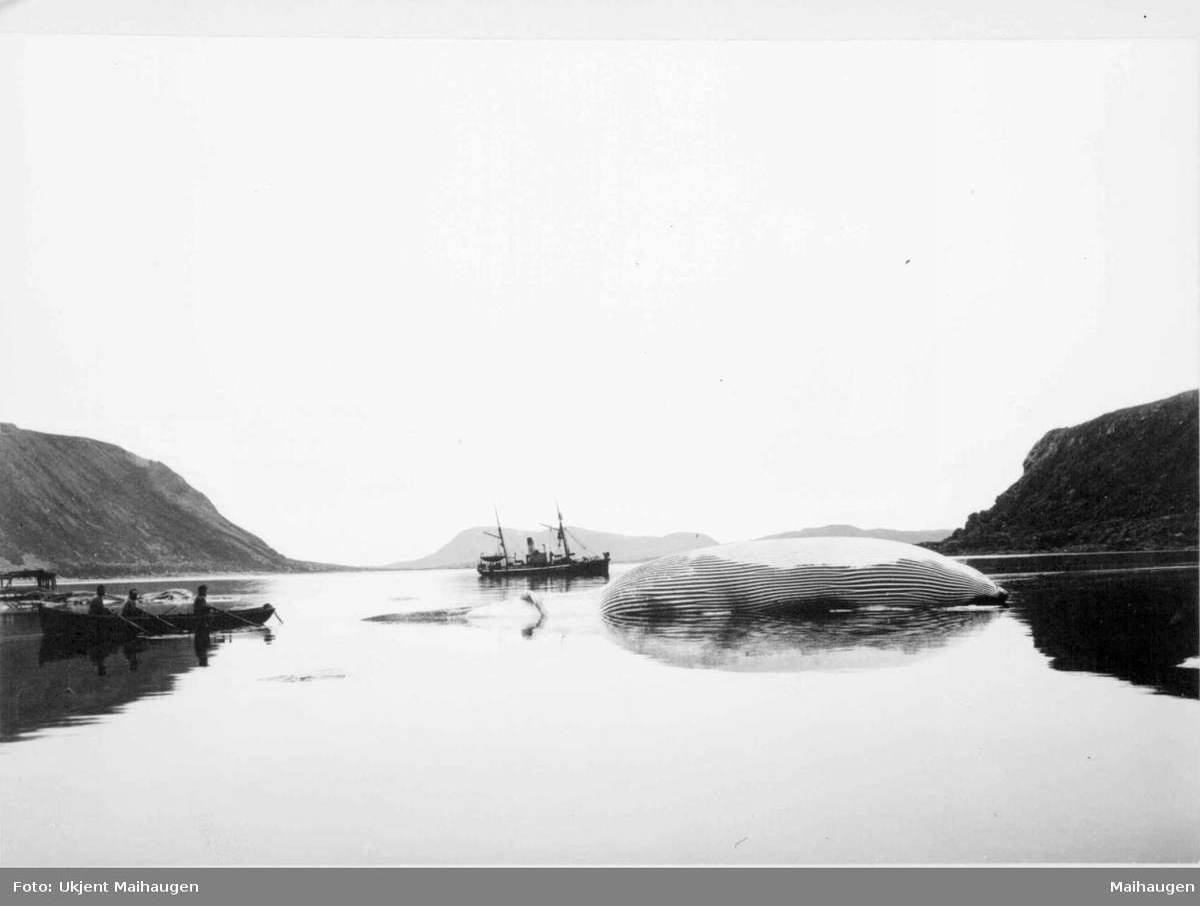 Repro: Hvalfangst med hval og hvalbåt.
