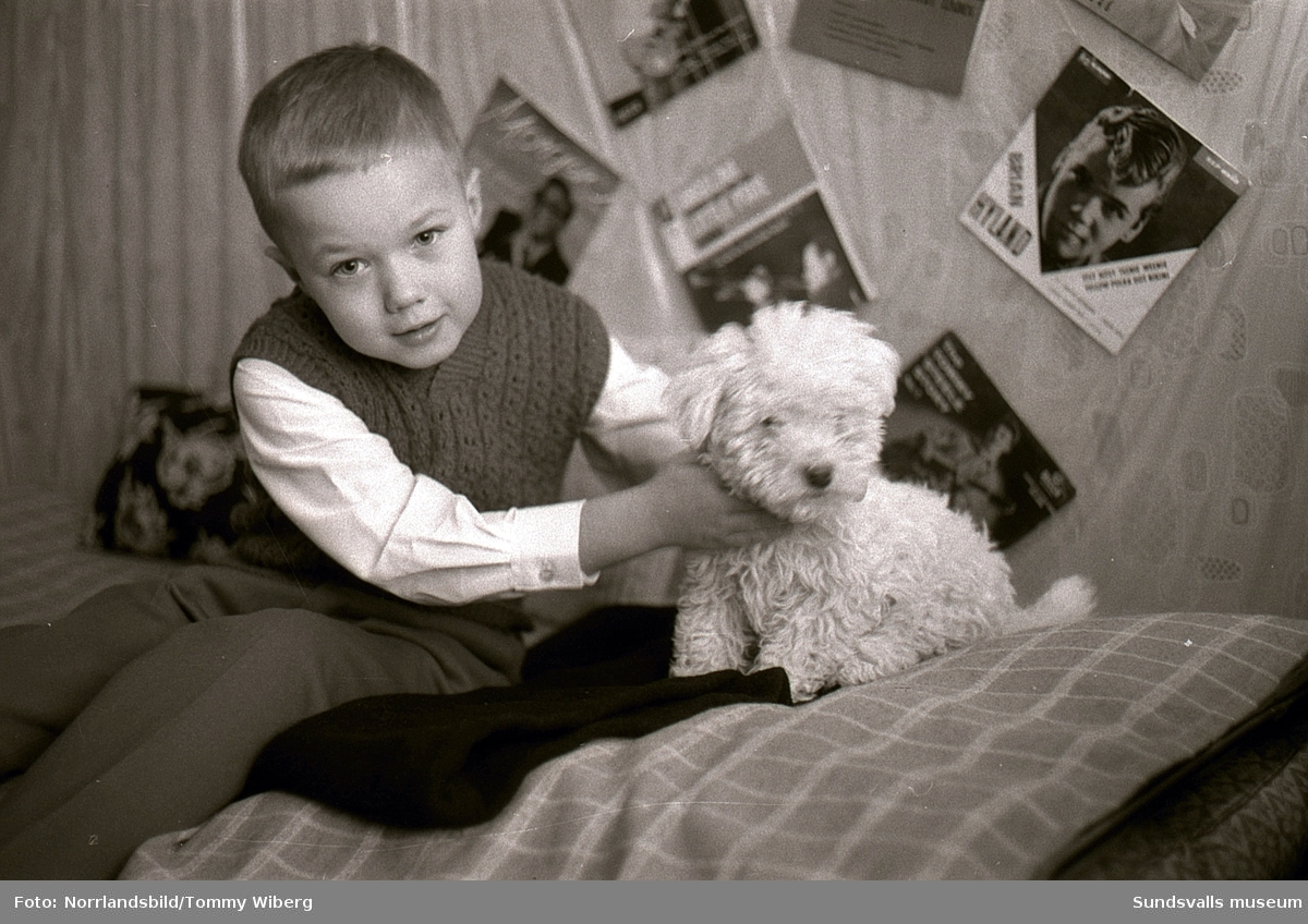 Bilder till Dagbladets julsaga 1960 som hette När Pelle fick en hund. Sagans Pelle bodde på Skepparegatan i hörnet av dåvarande Malmskillnadsgatan på gamla Norrmalm och många av bilderna är därifrån.