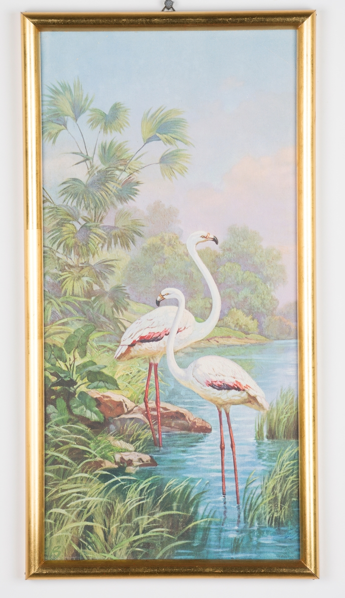 Flamingoer (mulig traner?) i vann
