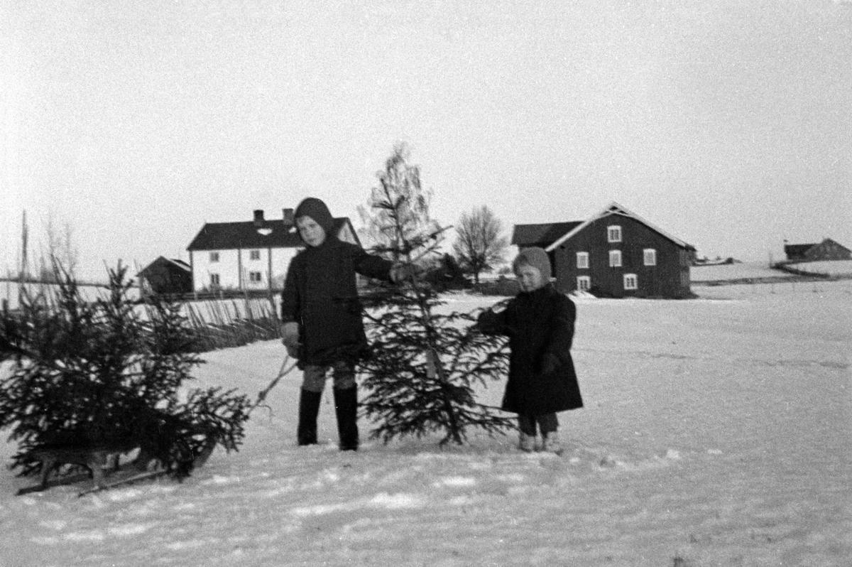 Svart-hvitt fotografi av to barn som står i snøen og har hentet juletrær. Det ligger et tre på bakken ved siden av dem, og så holder de ett tre mellom seg. I bakgrunnen ses et hvitt gårdshus og en låve. (Foto/Photo)